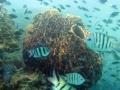 Neptune Sponges