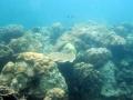 Pattaya Corals