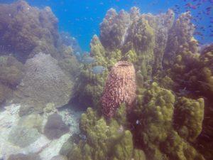 Pattaya Samae san Daily Dive Trips www.real-divers.com