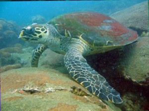 scuba diving pattaya