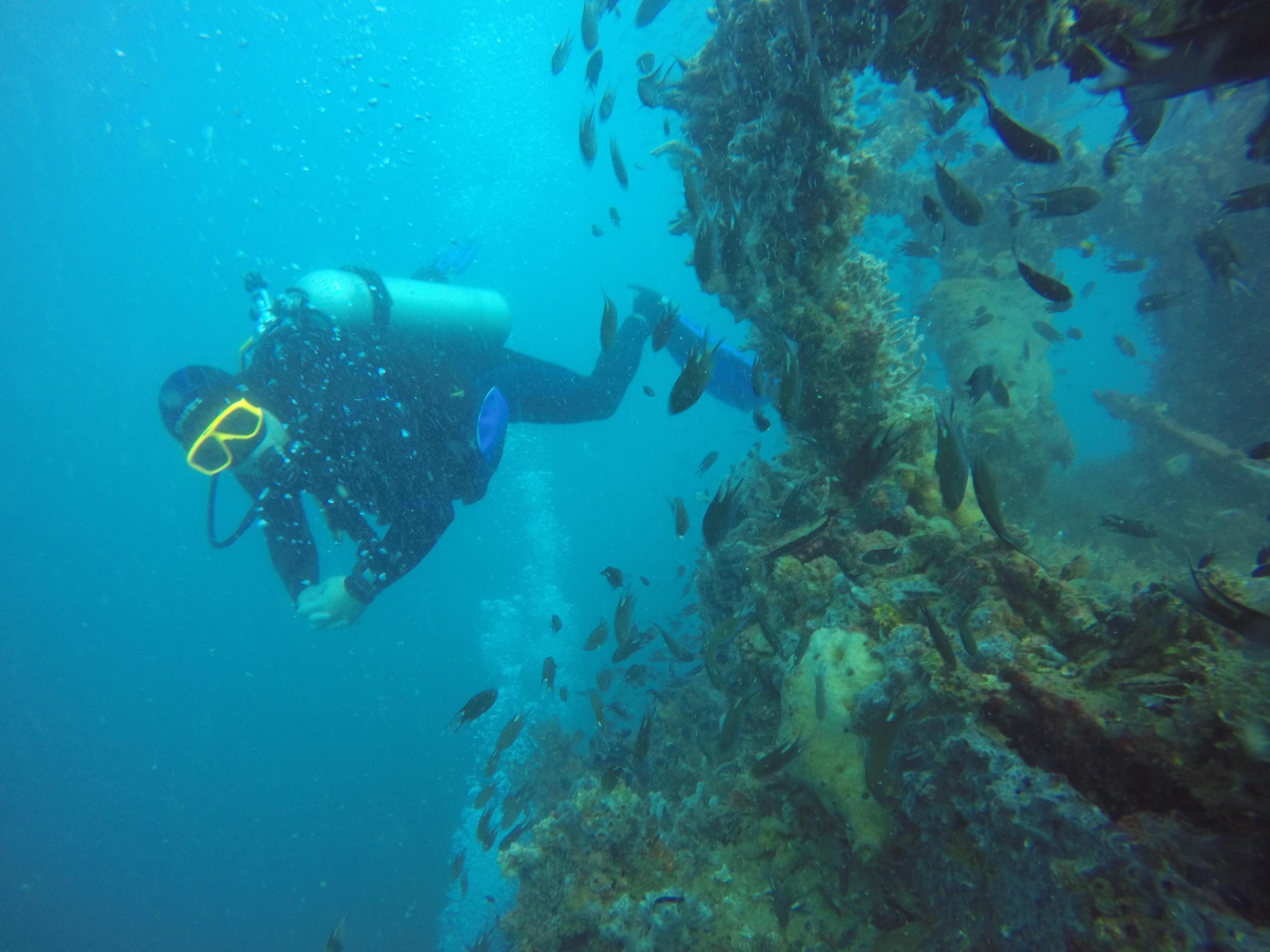 Samae san island scuba diving trips pattaya - Dive dive dive ...