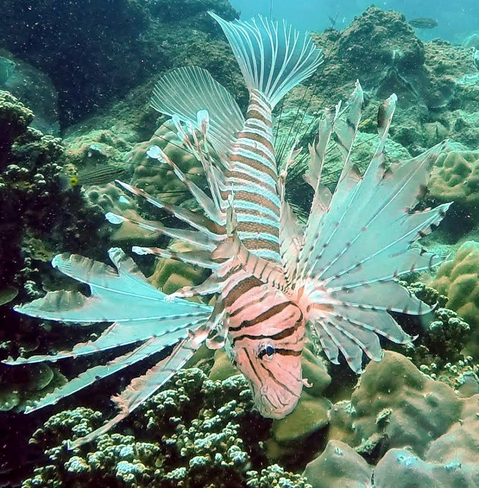 real-divers.com Samae San island scuba diving trips