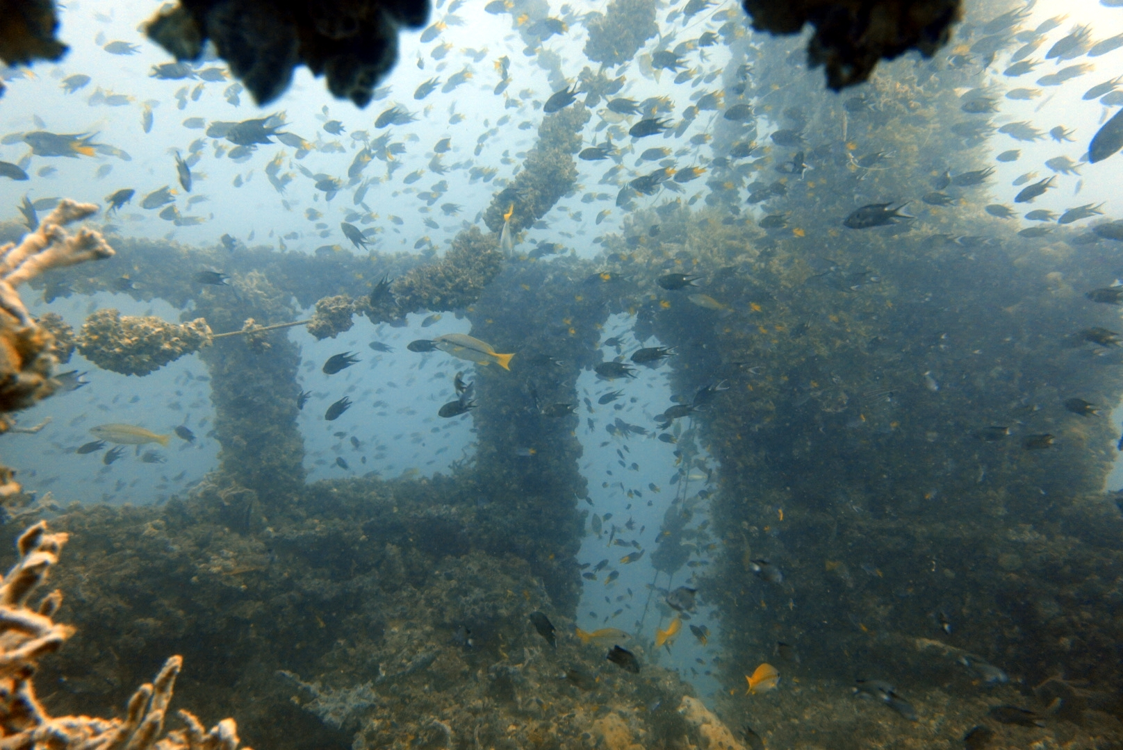 Scuba Diving Pattaya Thailand www.real-divers.com