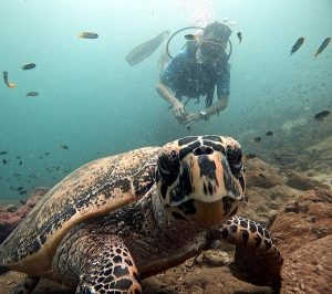 Private Pattaya Speedboat trips Pattaya Thailand www.real-divers.com
